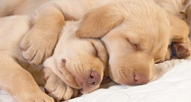 sleepingpuppyspooning